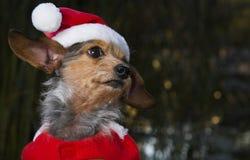 Skjuten liten blandad avelhund för profil som huvud bär Santa Hat Arkivbild