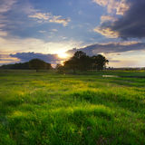 skjuten solnedgång för maccro äng Fotografering för Bildbyråer