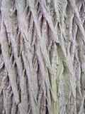 skjuten tree för skäll close upp Royaltyfria Bilder