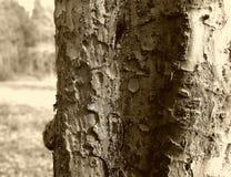 skjuten tree för skäll close upp Arkivfoton