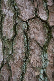 skjuten tree för skäll close upp Arkivfoto