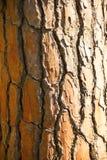 skjuten tree för skäll close upp Royaltyfri Bild