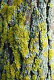 skjuten tree för skäll close upp Royaltyfri Foto