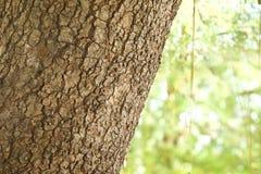 skjuten tree för skäll close upp Royaltyfri Fotografi