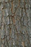 skjuten tree för skäll close upp Royaltyfria Foton