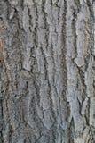skjuten tree för skäll close upp Arkivbilder