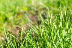 Skjuter ungt grönt gräs i parkerar royaltyfria bilder