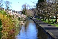 Tavistock kanal 2 Arkivbilder