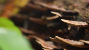 Skjutit av svamp tillväxter på träd lager videofilmer