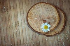 skjutit grunt för makro för blomma för chamomilecloseupdof Royaltyfria Bilder