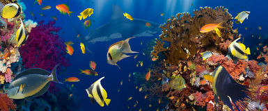 skjutit rött hav för korallfisk Royaltyfri Bild