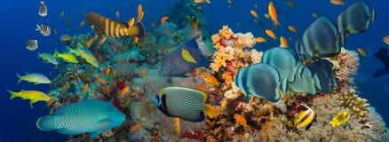 skjutit rött hav för korallfisk Fotografering för Bildbyråer