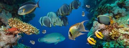 skjutit rött hav för korallfisk Arkivfoto
