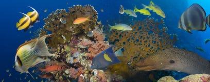 skjutit rött hav för korallfisk Royaltyfria Foton