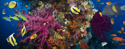 skjutit rött hav för korallfisk Arkivfoton