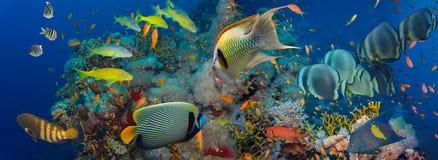 skjutit rött hav för korallfisk royaltyfria bilder