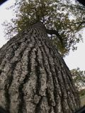 Skjutit upp ett träd Royaltyfria Foton