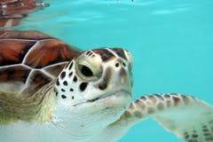 sköldpaddavatten Arkivbilder