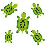 Sköldpaddor på vit bakgrund Arkivfoton