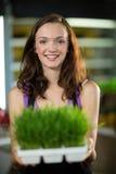 Sklepowy asystent trzyma tacę ziele w zdrowie sklepu spożywczego sklepie Obraz Royalty Free