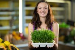 Sklepowy asystent trzyma tacę ziele w zdrowie sklepu spożywczego sklepie Zdjęcie Royalty Free