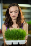 Sklepowy asystent trzyma tacę ziele w sklepie Fotografia Royalty Free