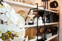 Sklepowy wnętrze z storczykowym kwiatem Zdjęcia Stock