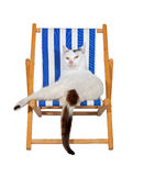 Skämmd bort katt på en deckchair Arkivbilder