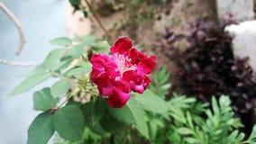 Skönhet av naturen Royaltyfri Foto