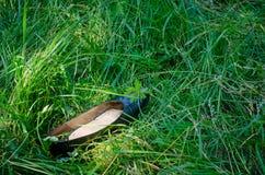 Sko i gräs Royaltyfria Foton