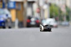 Sko på gatan efter olycka Arkivfoton