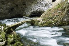 skocian rakovflod Arkivbild