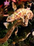 Skoczny zwierzę domowe obraz stock