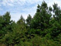 Skogöverkant med blå himmel Arkivbild