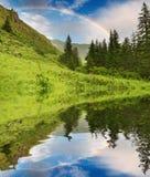 skog över regnbågen Arkivfoto