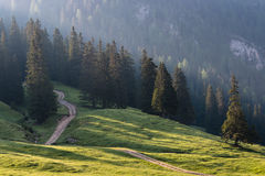 skog över strålsunen Arkivbilder