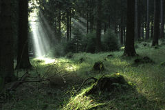 Skog \ 1 arkivfoton