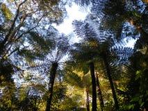 skog Royaltyfria Foton