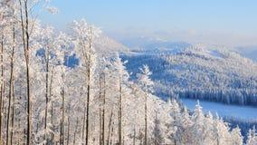 skog 14 inget snöig Arkivfoton