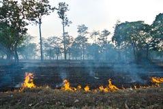 skog Fotografering för Bildbyråer