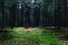 Skog #21 Fotografering för Bildbyråer