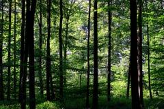 skog arkivbilder