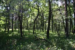 skog 3 Royaltyfri Fotografi