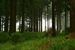 Skog #4 Fotografering för Bildbyråer