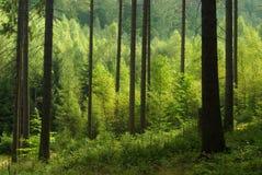 Skog 41 arkivfoto