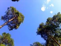 Skog Arkivfoton