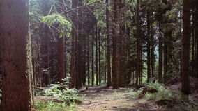 Skog stock video