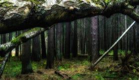 Skog Royaltyfria Bilder