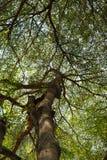 Skog 002 Fotografering för Bildbyråer