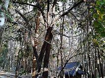 Skog Arkivfoto
